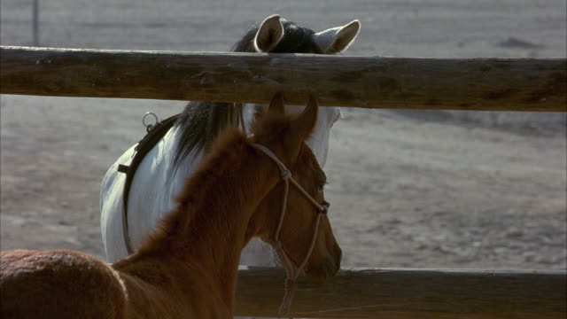 medium angle of white mare horse standing behind brown wooden fence. see brown foal or baby horse run up and nuzzle white horse. see brown foal chewing on something. see baby horse walk out of frame. - fence stock videos & royalty-free footage