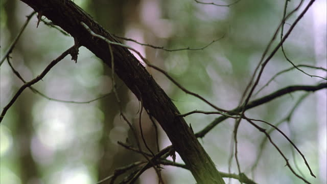 stockvideo's en b-roll-footage met close angle of bare tree branch in forest. insert. - bare tree