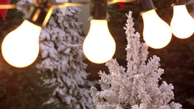 CLOSE ANGLE OF LIGHT BULBS STRUNG IN FRONT OF SEVERAL CHRISTMAS TREES IN A CHRISTMAS TREE LOT.