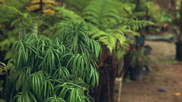 medium angle green ferns and other potted plants in foreground and background. could be greenhouse or nursery. - plant nursery stock videos and b-roll footage
