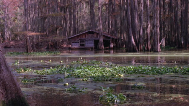 medium angle of shack in swamp.  trees stick out of water and lily pads lie in swamp. - sumpf stock-videos und b-roll-filmmaterial