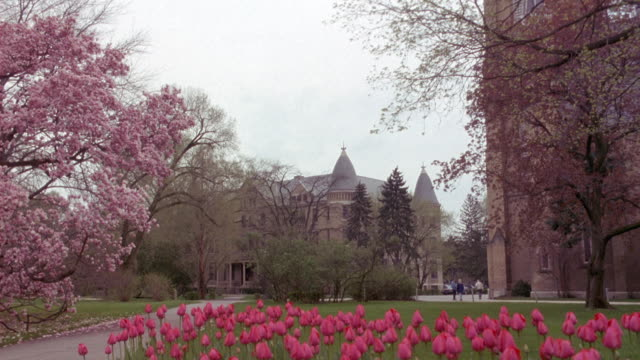 wide angle of college campus at notre dame university. tulips in foreground, blossoms on tree at left. spring. tulips in foreground. - indiana stock videos & royalty-free footage