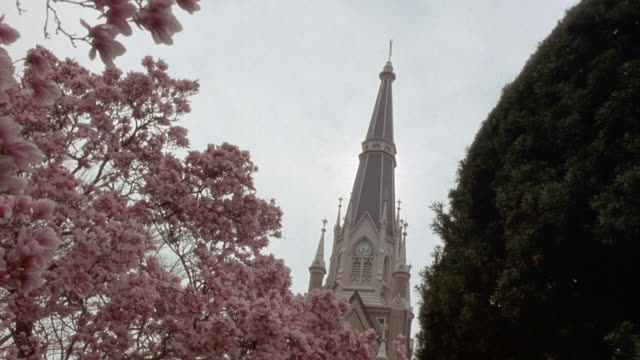 UP ANGLE OF CHURCH STEEPLE AT NOTRE DAME UNIVERSITY. BLOSSOMS ON TREE AT LEFT, SPRING.