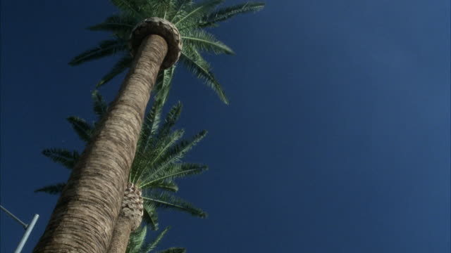 medium angle of palm trees on left, pans down to hard rock cafe guitar. restaurants. - ハードロックカフェ点の映像素材/bロール