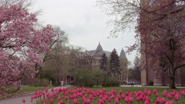 wide angle of college campus at notre dame university. tulips in foreground, blossoms on tree at left. spring. tulips in foreground. - south bend indiana stock videos & royalty-free footage