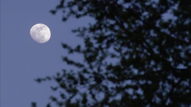 vídeos y material grabado en eventos de stock de up angle of full moon and trees blowing from wind. - luna
