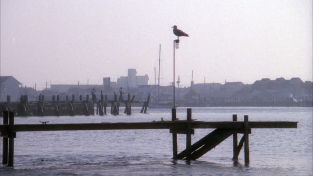 vídeos y material grabado en eventos de stock de established medium angle of silhouette of seagull on pole of dock by pier. - gaviota