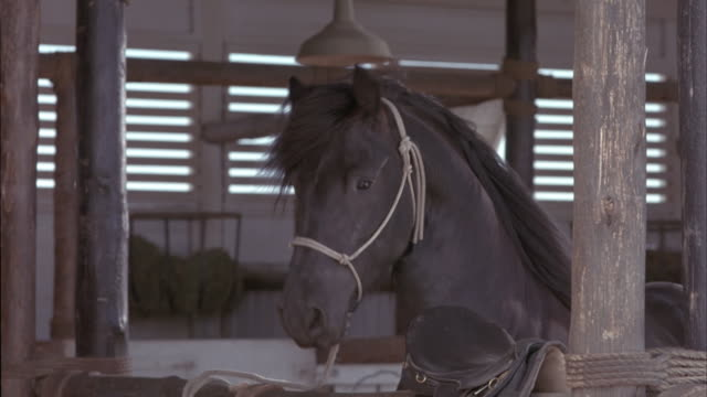 medium angle of black horse with rope halter tied to wooden gate or paddock of stable or pen. see its shiny black mane gently blow in the wind. it tosses its head. see stable worker walk in the background. - stable stock videos & royalty-free footage
