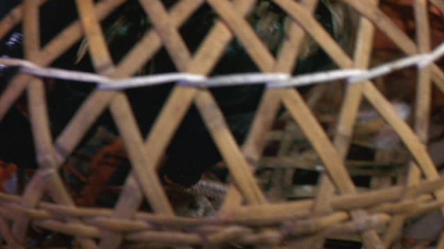 HAND HELD OF A CHICKEN IN A CAGE OR BASKET. SEE BROWN FEATHERS AND RED FACE. ANIMAL LOOKS AROUND WITH EYES. SEE CHICKEN FEET.