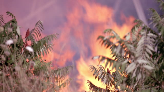 close angle of forest fire, plants in foreground on each side. smoke billows from fire. could be used for brush fire, in jungle or forest. - ontario canada stock videos & royalty-free footage