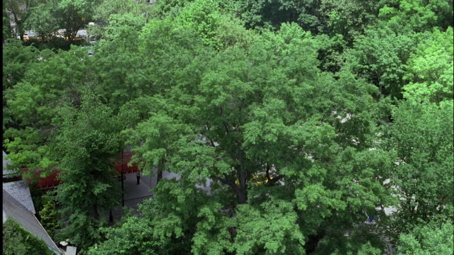 aerial over central park looking down on the top of green trees. parking lot, city streets, and multi-story buildings visible in background. - tavern on the green stock videos & royalty-free footage