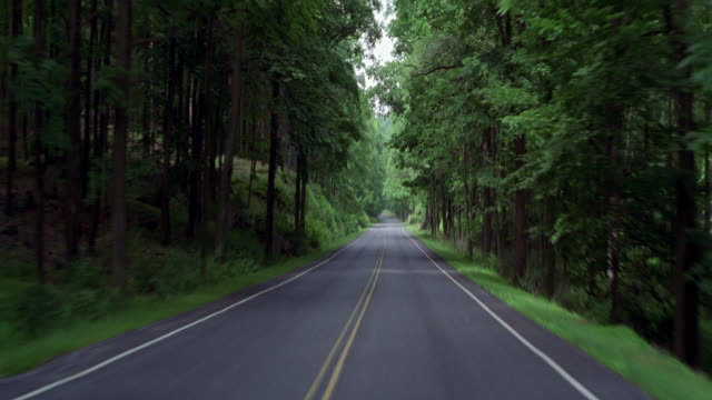 process plate pov looking forward on driver's side driving on mountain road with dense green trees lining the sides. - mountain road stock videos & royalty-free footage