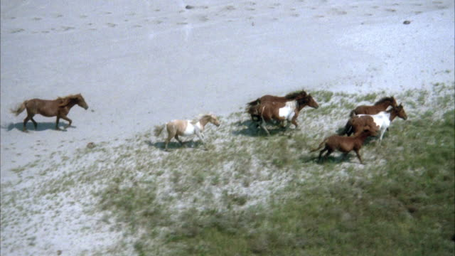 aerial of eight wild horses running along beach or sandy area near beach. see sand and patches of grass on ground. see ocean in background. - 1986 stock videos & royalty-free footage