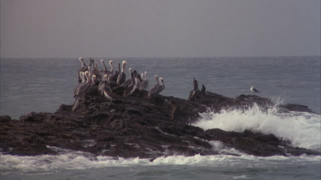 medium angle of seagull birds on rock outcropping with surf from waves hitting rocks. - surf rock stock videos & royalty-free footage