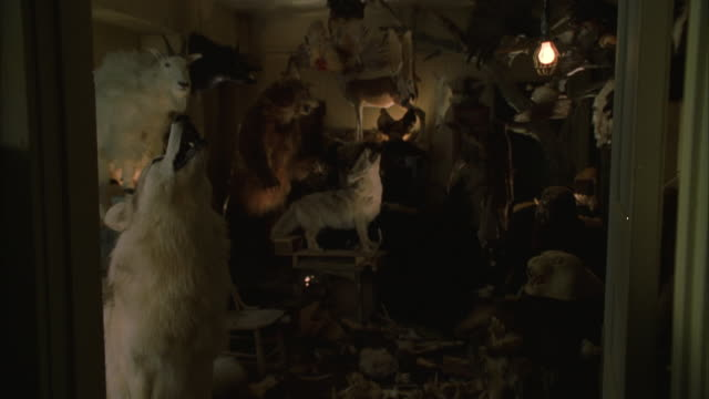 WIDE ANGLE OF TAXIDERMY ROOM. STUFFED WILDLIFE - BEARS, WOLVES, GOATS, BIRDS - PACKED IN ROOM. SINGLE LIGHT BULB HANGS FROM CEILING. COULD BE TAXIDERMY SHOP.