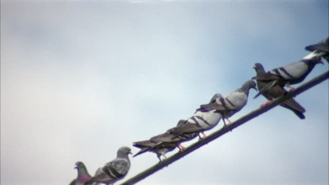 vídeos de stock e filmes b-roll de medium angle of birds sitting on a telephone wire. see telephone pole at left. pigeons. - cabo