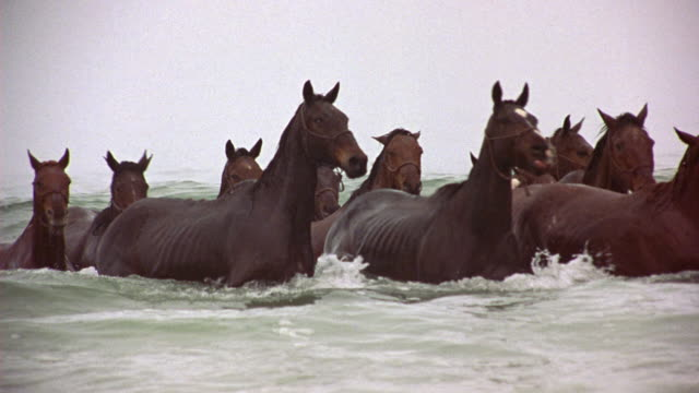 medium angle of herd of brown horses swimming in gray waters of ocean or sea toward the camera. see heavy mist or fog over the waters as the horses swim. - 1914年点の映像素材/bロール
