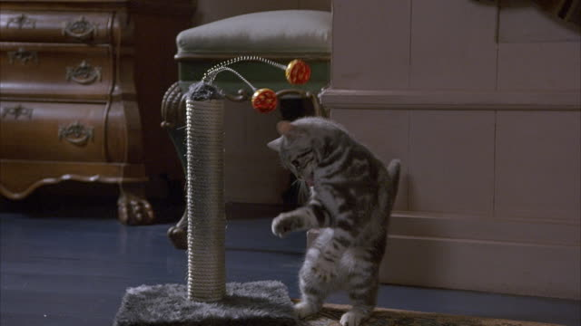 MEDIUM ANGLE OF GRAY TABBY CAT PLAYING WITH TOY. SEE CAT PAW AT AND LICK TWO ORANGE BALLS ON SPRINGS ATTACHED TO POST WRAPPED IN ROPE.