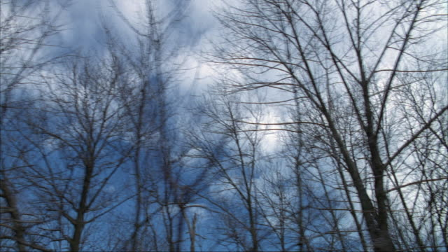 stockvideo's en b-roll-footage met up angle straight side process plate passenger's side of bare tree branches in forest or woods. see blue sky and clouds in background. - bare tree