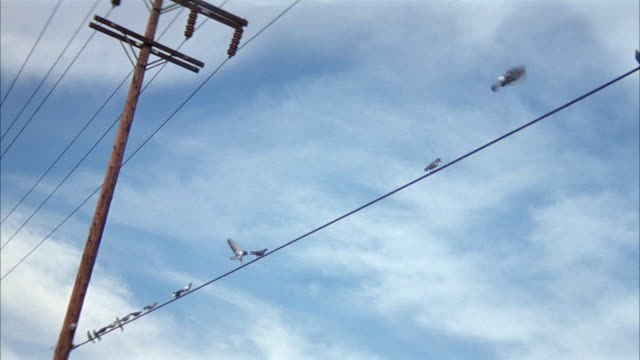 wide angle of birds sitting on a telephone wire. see telephone pole at left. pigeons. - linea telefonica video stock e b–roll