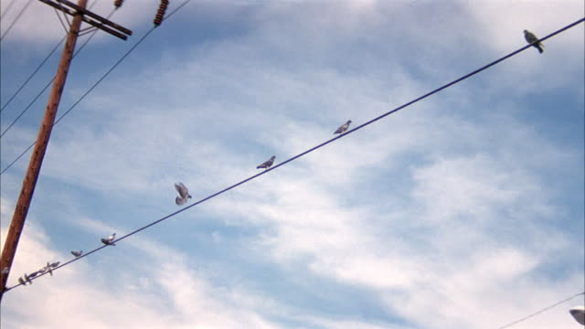 wide angle of birds, pigeons sitting on a telephone wire. see telephone pole at left. - cable stock videos & royalty-free footage