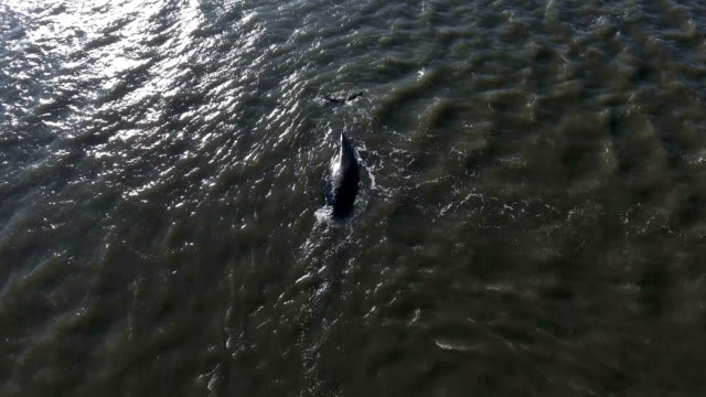 //www.nbcnewyork.com/news/local/whale-moriches-bay-euthanized-ny-long-island-water-nyc-402729596.html - https stock videos & royalty-free footage
