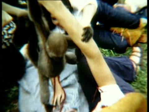 people lying on grass watching monkey swinging on person's arm/ bethel, new york, usa - menschlicher arm stock-videos und b-roll-filmmaterial