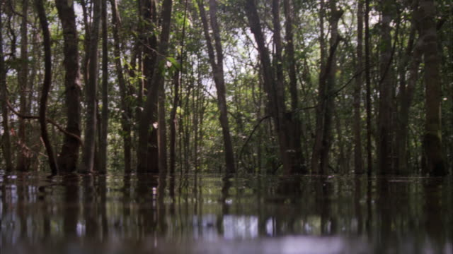 medium angle of jungle river or swamp seen from water level pov. see trees growing in the water. see green leafy jungle canopy. see ripples in water. camera moves through swamp or river. camera briefly goes below water level two times. - wetland stock videos & royalty-free footage