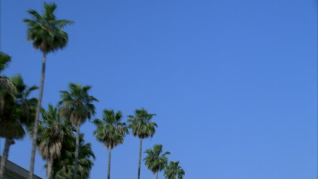 hand held moving pov convertible up at palm trees lining road. billboard at beginning says 'coliseum. pass sign that reads days inn. - convertible stock videos & royalty-free footage