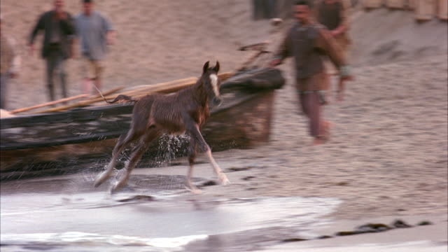 medium angle of wet brown colt or baby horse running up onto beach from ocean. see wooden row boats on beach in background.  see men, could be sailors, running after horse, trying to catch it. - 子馬点の映像素材/bロール