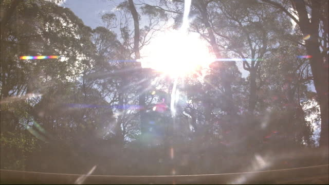 medium angle of forest with sun in background. see black steam engine train enter pov on right. see train obstruct pov. see sun shining through gaps between boxcars. - c119gs点の映像素材/bロール