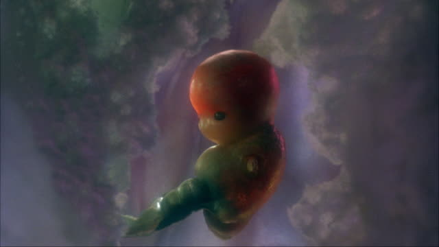 close angle zoom in of fetus or premature baby in uterus. fetus is attached to umbilical cord. see heart beating. human body. - fetus stock videos and b-roll footage