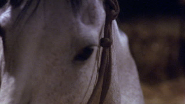 medium angle of tan foal laying on straw covered floor of barn or stable. see white mare horse lean kneeling over foal. - pferdestall stock-videos und b-roll-filmmaterial