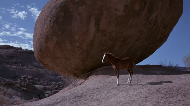 vídeos de stock e filmes b-roll de medium angle of brown horse standing on rocky cliff next to giant boulder. see horse or foal walk down rocky slope. see round boulders and desert shrubs in background. - penedo