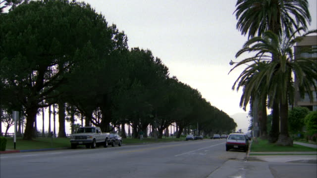 MEDIUM ANGLE OF CARS DRIVING DOWN TWO LANE STREET IN BOTH DIRECTIONS. SEE STREET LINED BY ROWS OF TRESS. PANS UP TO PATCH OF PALM TREES SWAYING IN BREEZE. SKY IS OVERCAST AND GRAY.