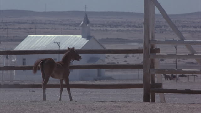 MEDIUM ANGLE OF CORRAL. SEE BROWN FOAL STANDING AT CORRAL FENCE EDGE. SEE WHITE HORSE GALLOP TO FOAL ON OPPOSITE SIDE OF FENCE, GALLOP AWAY AND RETURN MULTIPLE TIMES.