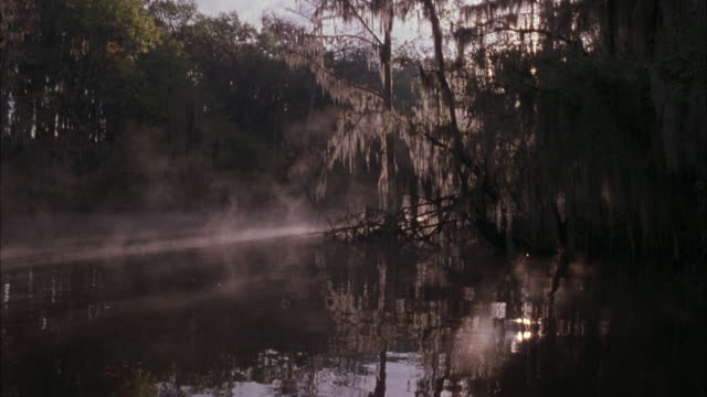 vidéos et rushes de medium angle of swamp area with sun rays and fog in background. willow trees on right. reflection of sun in water. - marécage