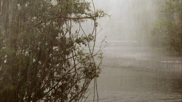 MEDIUM ANGLE OF RIVER, MARSH OR SWAMP WITH HEAVY RAIN, POSSIBLY STORM. SEE JUNGLE OR RAINFOREST ON SIDES OF RIVER. VISIBILITY IS LOW DUE TO THICK FOG.