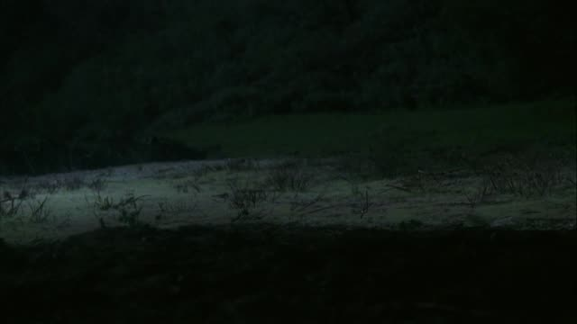 medium angle of large field or opening. police or rescue helicopter with lights on enters screen from top and lands. several soldiers exit and run toward and past camera. - blaulicht stock-videos und b-roll-filmmaterial