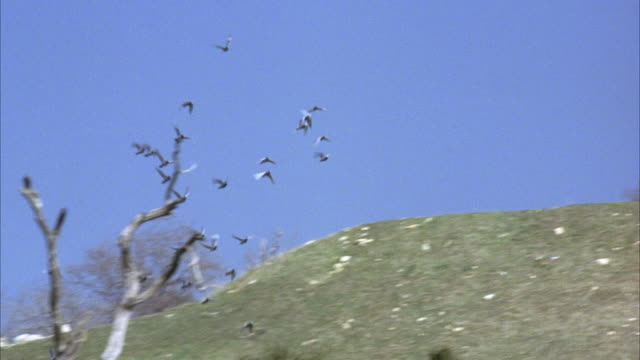 hand held. set in elysian park. see trainers standing next to birdcages. trainers let birds fly out from top of hill and up to sky. birds circle around in sky. - gabbia per gli uccelli video stock e b–roll