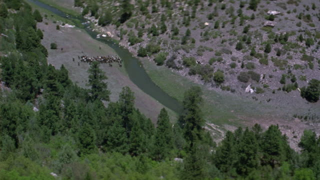 high angle down of cattle drive next to river banks. valley in prairie or grasslands landscape. could be countryside with trees and valleys. - cattle drive stock videos & royalty-free footage