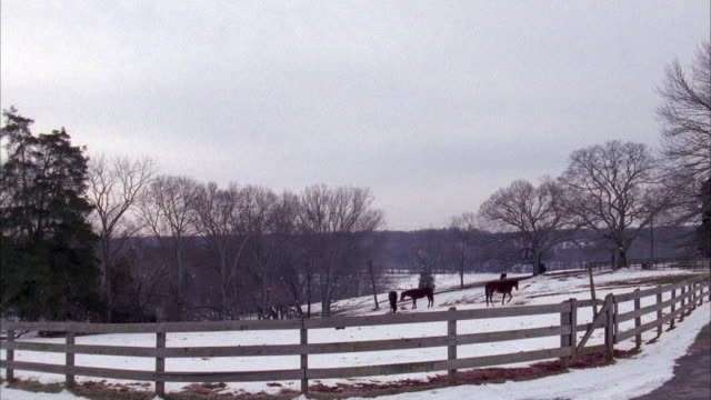 tracking shot of green ford explorer driving on road from right to left. farm or countryside with wood fence in foreground. see horses in field and blanket of snow on ground during winter. - ford motor company stock videos and b-roll footage
