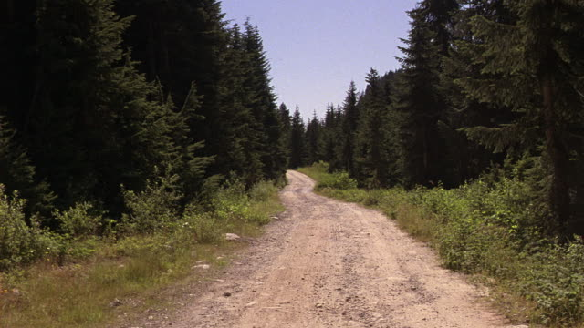 stockvideo's en b-roll-footage met process plate straight back of dirt or gravel road in forested wilderness. see pile of gravel next to road.  see blue sky, pine trees, underbrush and wild flowers on sides of dusty road. part of longer take. 48 fps. - grind