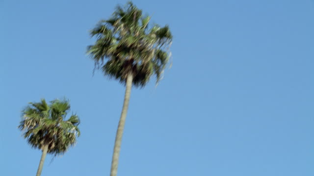 stockvideo's en b-roll-footage met medium angle moving pov from passenger side of car of palm tree lined city street. pov looks up to see office building on right at beginning. - hollywood california