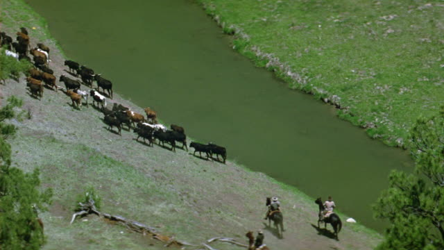 high angle down of cattle drive next to river banks. cowboys horseback riding. valley in prairie or grasslands landscape. could be countryside with trees and valleys. - cattle drive stock videos & royalty-free footage