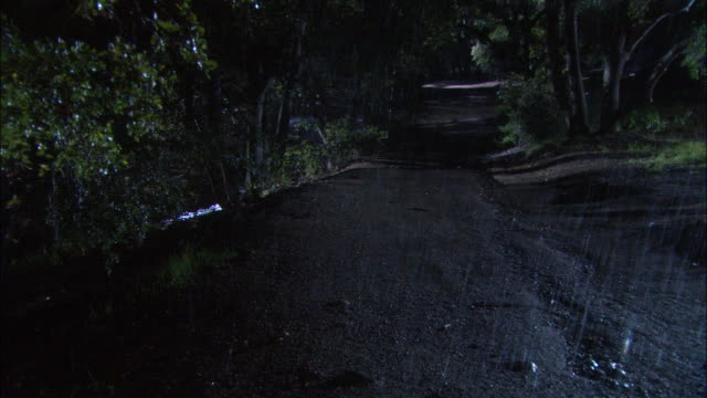 medium angle of dirt road closely lined with green leafy trees and foliage. see rain begin to pour. see person walking in forest to right and move out of pov. - police car stock videos & royalty-free footage