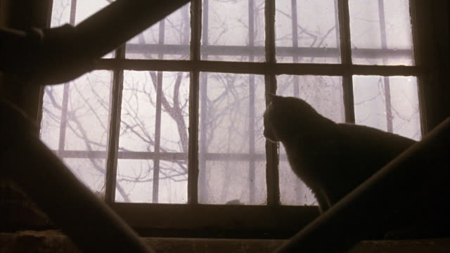 medium angle of large window against staircase. see rails of staircase in foreground. see view of bare branched trees through window. see dry leaves on ground. see black cat sitting on right on window. - 黒猫点の映像素材/bロール