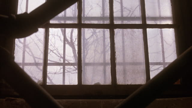 medium angle of large window against staircase. see rails of staircase in foreground. see view of bare branched trees through window. see dry leaves on ground. see black cat jump onto window. - 黒猫点の映像素材/bロール