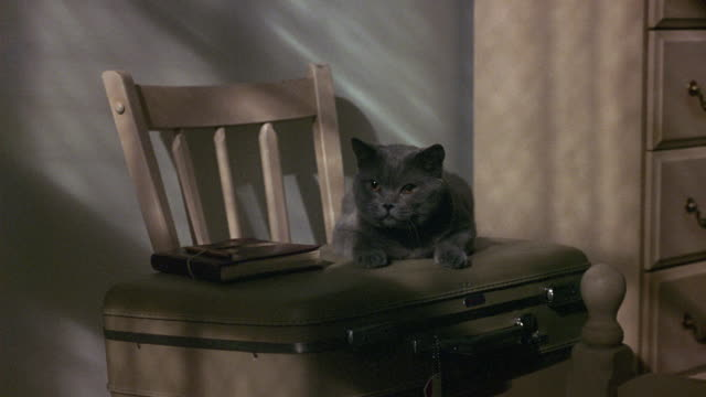 medium angle of gray cat sitting on top of green suitcase. see diary or journal or book next to cat. suitcase is on top of chair. see part of chest of drawers frame right. - drawer stock videos & royalty-free footage