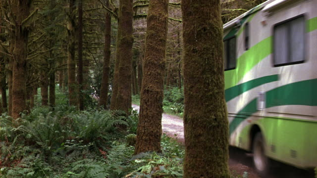 wide angle of wilderness or forest area. see thick or dense pine trees with moss covered bark. could be redwoods. large green rv or motor home drives on dirt road right to left. - wohnmobil stock-videos und b-roll-filmmaterial